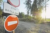 Леса Сибири и Дальнего Востока безжалостно вырубают ради экспорта в Китай