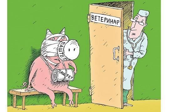 Африканскую чуму свиней (АЧС) всё чаще обнаруживают в готовой пищевой продукции