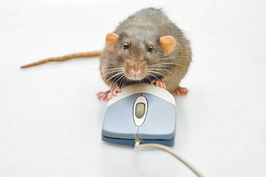 Блогеров сравнили с крысами