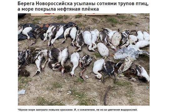 Мертвые птицы Новороссийска