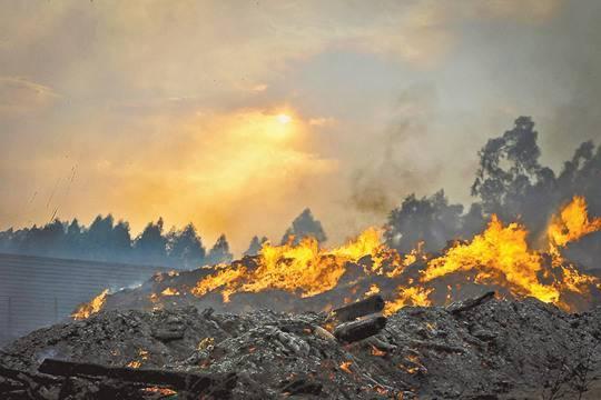 Площадь лесных пожаров в России каждый год растёт