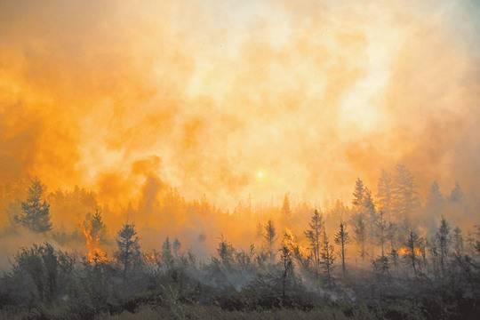 Площадь лесных пожаров в РФ значительно увеличилась