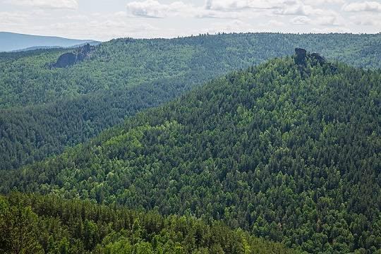 При попустительстве краевых властей красноярские лесопромышленники создают в тайге свободные от контроля участки