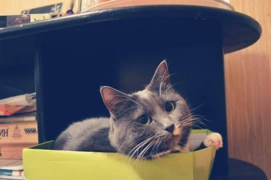 Зоопсихолог дал объяснение любви кошек к коробкам