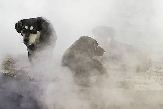 30 000 горожан ежегодно становятся жертвами нападений псов