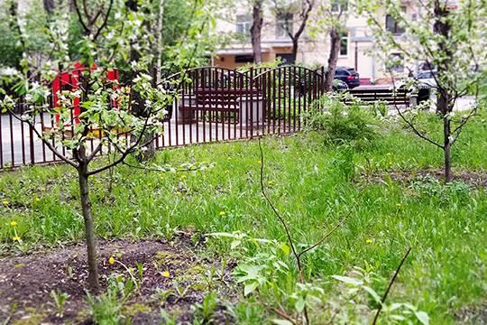 Акция Лес Победы: в Подмосковье высаживают деревья в память о героях Великой Отечественной войны