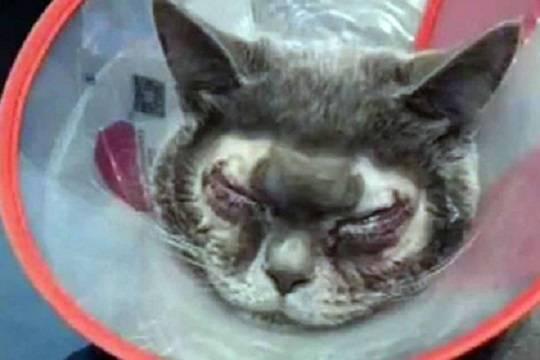 Китаянка сделала пластическую операцию своем коту и взбесила пользователей