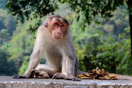 Компания Маска показала видео с обезьяной, играющей в видеоигру силой мысли