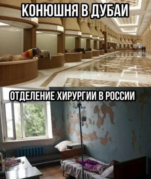 Конюх Кадырова - лошади, имущество и большая ответственность