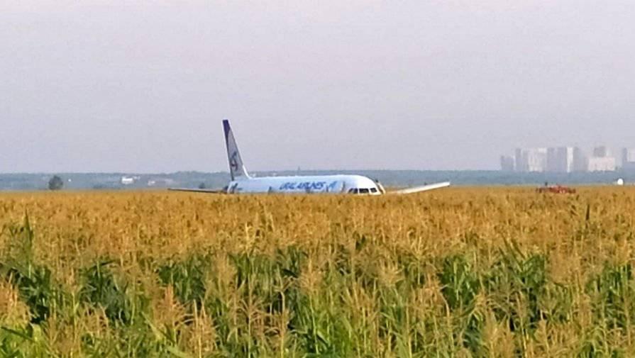 Пилоты «Уральских авиалиний» посадили А321 с отказавшими из-за птиц двигателями в кукурузном поле и спасли 233 человека
