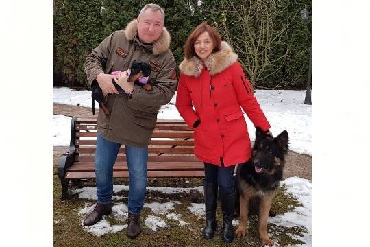 Рогозин вместе с таксой поздравил россиян с Новым годом