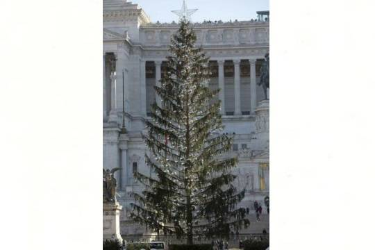 Рождественская елка вРиме пострадала при транспортировке истала объектом шуток