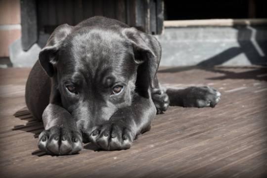 Школьница умерла от удушения во время прогулки с собаками