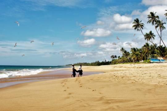 Шри-Ланка готова принять туристов в августе