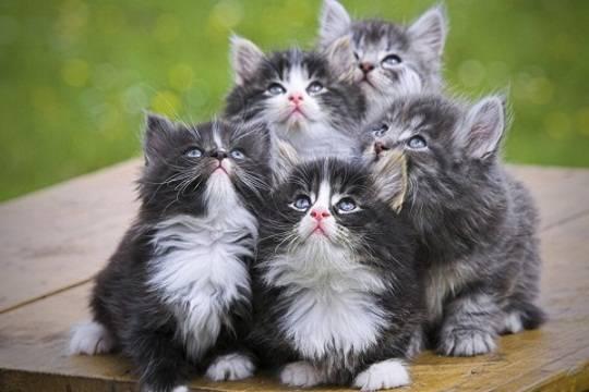 Хозяевам больных кошек грозят слабоумие ирак мозга