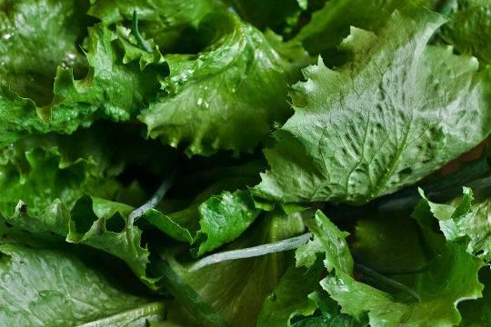 Ученые узнали детали обопасности зеленых салатов