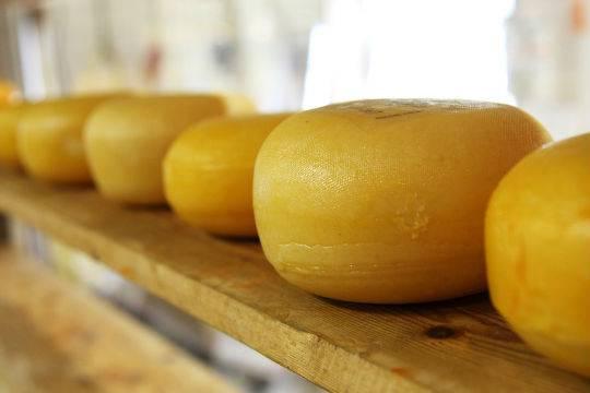 Ученые поведали, как сыр может спасти отрака