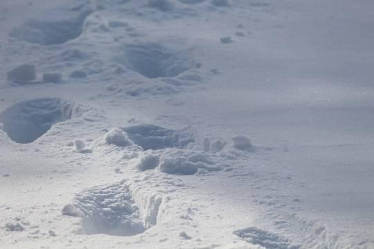 В Башкирии девушка попыталась задушить и закопать в снег младшего брата