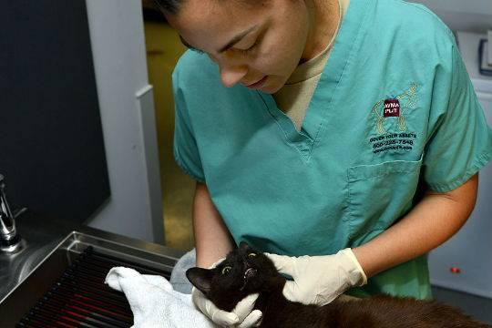 ВИталии спасли проведшего 16 дней под завалами кота