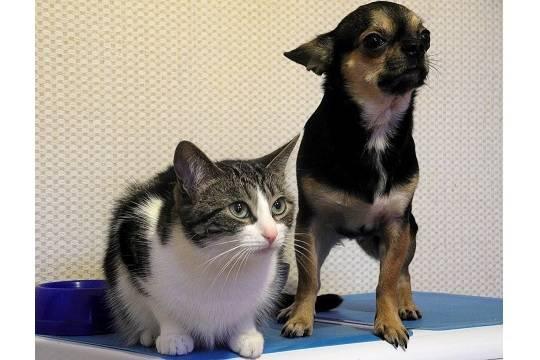 В России предложили ограничить количество кошек и собак в квартирах