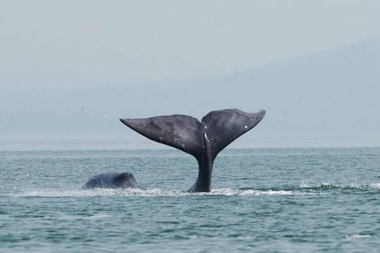 Рыбаков-живодеров, наехавших нагренландского кита, ищут вХабаровском крае