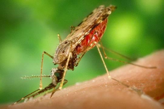 Встолице Китая зафиксирован один случай заболевания лихорадкой Зика