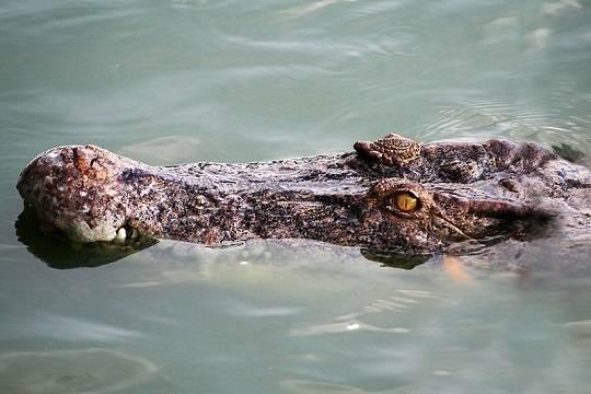 Замбийца растерзали за «превращение» в крокодила ради убийства девушки