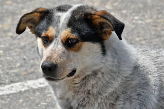 Жители Адлера сообщили о массовом убийстве собак в центре города
